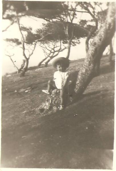 La pinède béni-safienne (vers 1950/51)